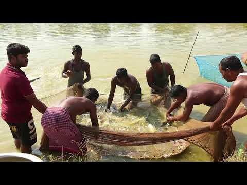 Neeli Kranti Documentary Film