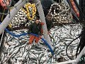 Amazing World Big Catch Trawler Fishing Boat - Lot Of Live Fish Catching At Sea