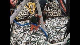 Amazing World Big Catch Trawler Fishing Boat - Lot Of Live Fish Catching At Sea