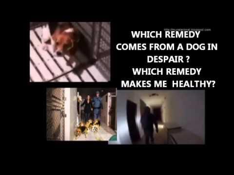 THE REMEDY O REMÉDIO- ANTI-VIVISECTION