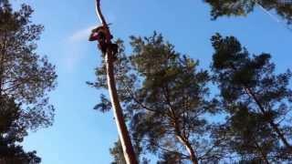 Копия видео пилим деревья по средствам альпинизма(, 2014-02-12T19:26:25.000Z)