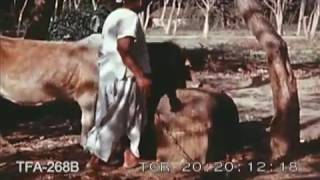 A Family of India (1954)