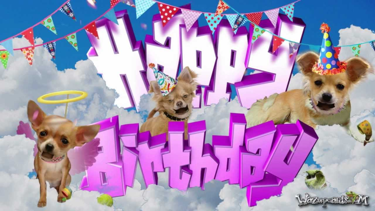 Happy Birthday Chihuahua Dog For Her Youtube