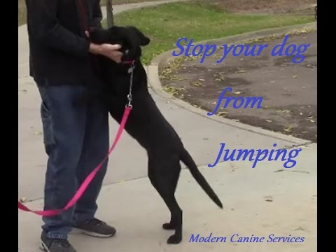 Teach your dog to greet people without jumping