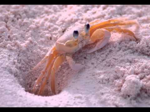 Crab Facts - Facts About Crabs - YouTube