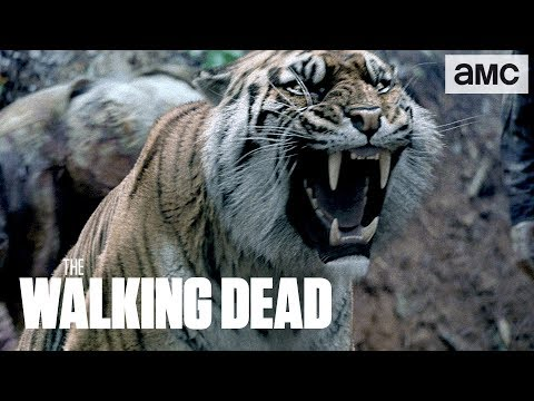 (SPOILERS) 'Shiva Saves the Day' Talked About Scene Ep. 804 | The Walking Dead