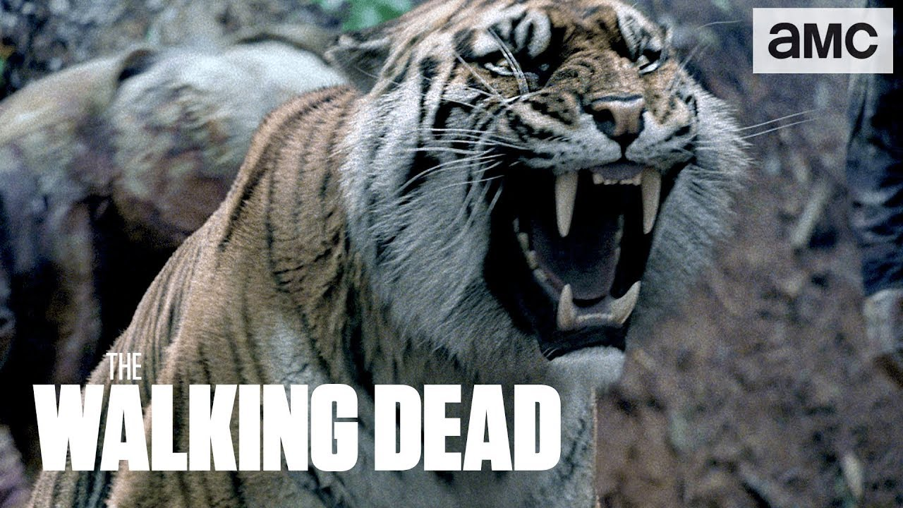 spoilers-shiva-saves-the-day-talked-about-scene-ep-804-the-walking-dead