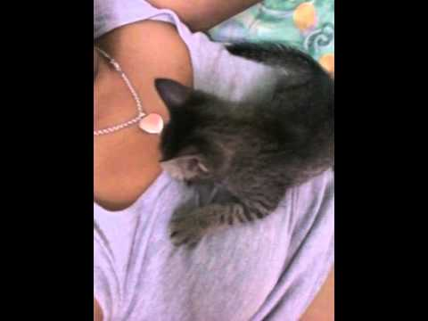 Kitten trying to breast milk with human thumbnail