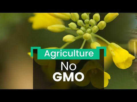 No-Go for GM Crops