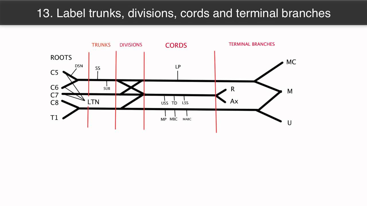 How to draw the brachial plexus in under 2 minutes youtube how to draw the brachial plexus in under 2 minutes pooptronica