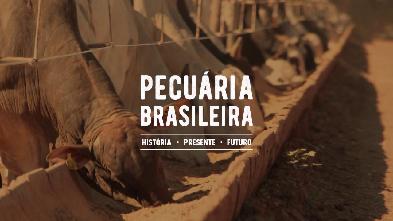 A Pecuária no Brasil.