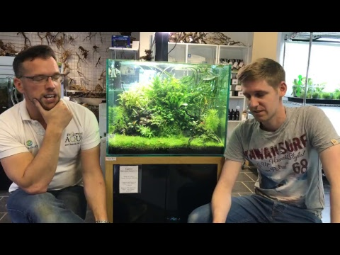 Live from Aquarium Gardens - Nature Aquarium chat!!