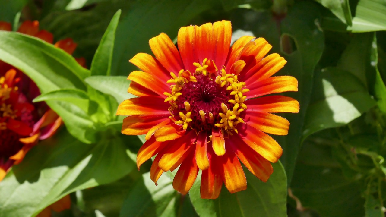 Orange-colored Flowers are beautiful, too. - YouTube