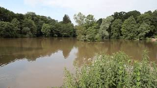 CREEDY LAKES, CREDITON, DEVON