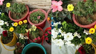 हरी पत्तियों और ज्यादा फूलों के लिए नियमित प्रयोग करें ये शक्तिशाली liquid फर्टिलाइजर