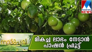 Passion fruit farming in Kerala | Nattupacha | 10-07-2016 | Manorama News