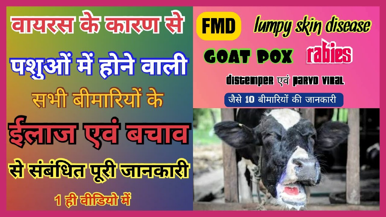 viral disease in animals | lumpy skin disease in cattle | foot and mouth disease in cattle |goat pox