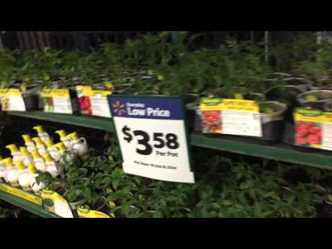 Bonnie Plants Come From Non-Gmo Seeds