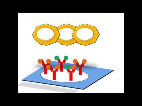 ELISpot  | The Enzyme-Linked ImmunoSpot assay