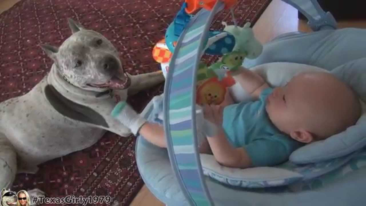 THE NANNY DOG PIT BULL SHARKY AND BABY | TexasGirly1979 ...
