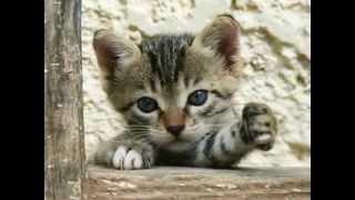 Котёнок с серыми глазами.