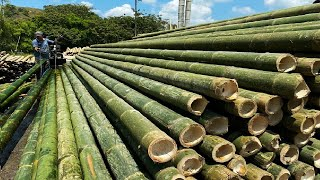 Amazing Bamboo Farming Techniques - Bamboo Product Processing in Factory - Bamboo Harvest Machine