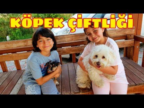 Köpek Çiftliğine Gittik, Bu Köpekler Çok Tatlı. (Maltese, Cocker, Chihuahua)