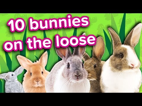 10 Bunnies on the Loose // Funny Animal Compilation