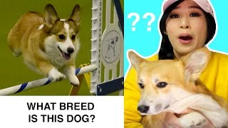 Do You Know These Dog Breeds?