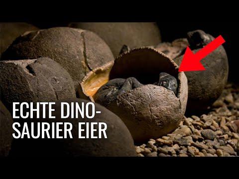 Chinesischer Junge findet versehentlich 66 Millionen Jahre alte Dinosaurier Eier!