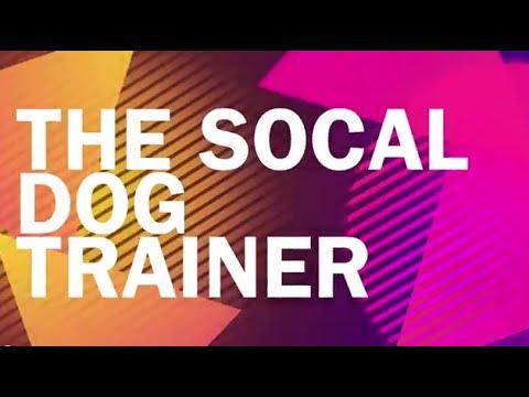 Doberman Pincher Puppy Basic Obedience Dog Training