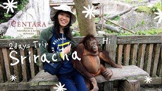 タイにある日本人の街シーラチャ旅行のススメ★世界最大級の動物園がド迫力
