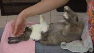 How to Groom your Rabbit - Teeny's Tips