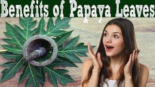 Surprising Health Benefits of Papaya Leaves | Advantage of Papaya Leaves.