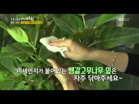 2TV 아침 2부 실내공기정화