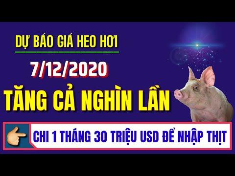 Dự báo giá heo hơi ngày 7/12/2020 | VN chi mỗi tháng 30 triệu USD để nhập khẩu thịt lợn