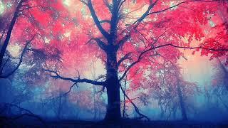 Llewellyn & Chris Conway - Magical Earth