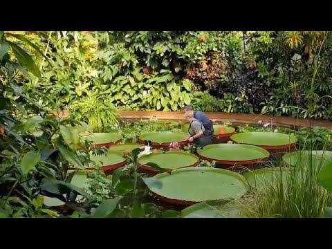 Tropical Greenhouses Of The Royal Botanic Garden, Edinburgh