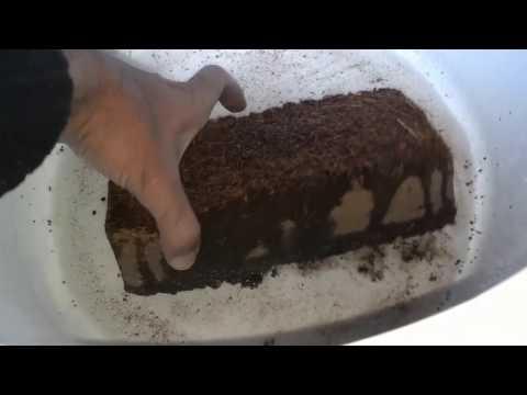 How To Use Coco Peat | How To Make Bonsai Soil (Urdu/Hindi)
