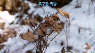 겨울에 허수아비처럼 서있는 산야초의 묵싹 알아보기(겨울…