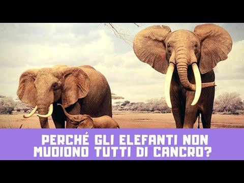 Perché gli elefanti non muoiono di Cancro?