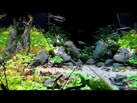 Aquarium - Mountainscape - Ionut Godea - 1080p [HD]