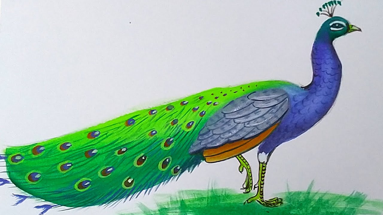 How to draw a Peacock with poster colour step by step for ...