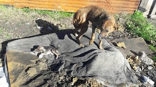 Poor Mother Dog and Puppies Dumped at The House Fired, Look at Me with Sadness Eyes Begging for Help