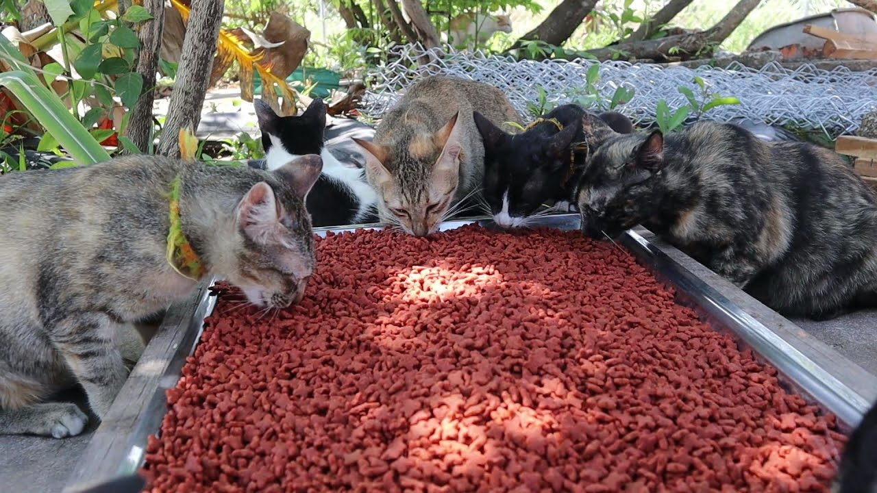 Lovely Cats eating food - Homeless Cats in the Real live | The Gohan Dog And Cats