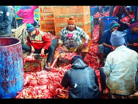 Asia's Largest Chicken Market   Ghazipur Murga Mandi Delhi India by The Tourism School