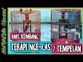 Anis Kembang Gacor Manfaat Setelah Di Cas Tempel  Mp3 - Mp4 Download