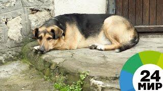 В Турции бродячая собака каждый день ходит в душ на автомойку (ВИДЕО) - МИР 24