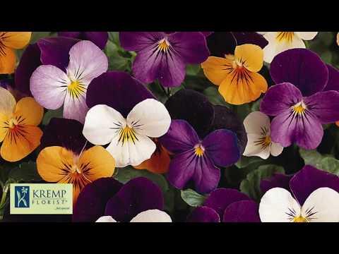 Flower Meanings By Kremp Florist