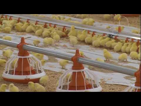 Модернизированный корпус открыли на птицефабрике «Тюменский бройлер»
